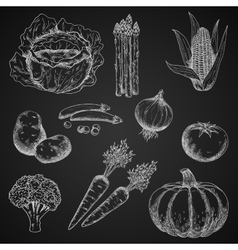 Chalk sketches of fresh vegetables vector image