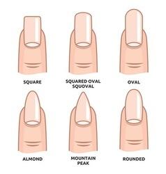 Nail shape set6 vector image vector image