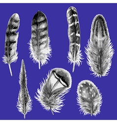 Feather black and white vector