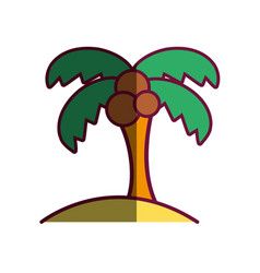 palm tree with coconuts and leaves vector image