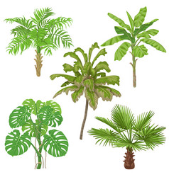 tropical plants isolated vector image
