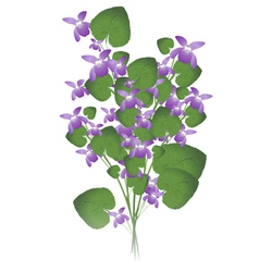 Bunch of wild violet vector