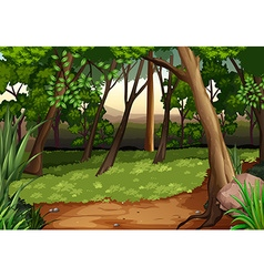 Scene with trees and field in forest vector