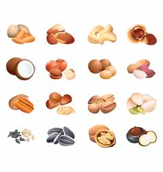 calorie table nuts and seeds vector image vector image