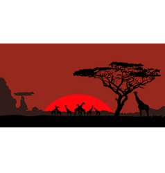 African landscape with giraffes vector