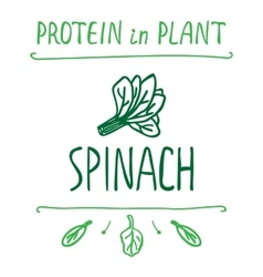 Hand drawn spinach leaves vector