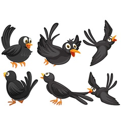 Black birds vector image vector image