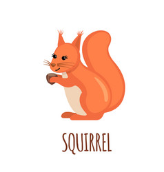 cute squirrel in flat style vector image