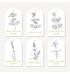 Tags collection with hand drawn spicy herbs vector