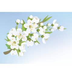 blossom tree branch vector image