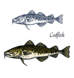 Cod fish isolated sketch icon vector