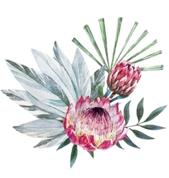 Tropical protea composition vector