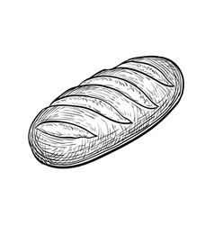 loaf of bread vector image vector image