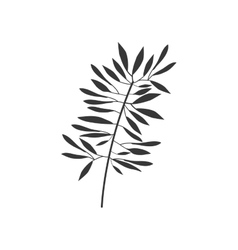 Gray scale branch olive with leaves vector