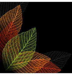 Skeleton leaf background vector