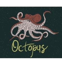 Color octopus vector image vector image