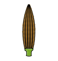 Corn cob isolated icon vector