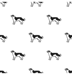 St bernard dog icon in black style for web vector