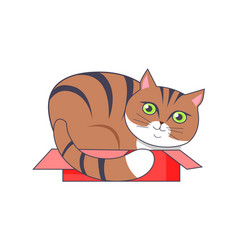 Cat sitting in box red color vector
