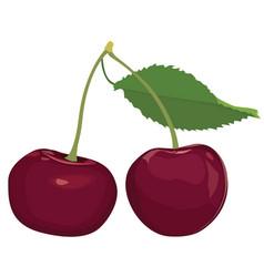 Cherries isolated cherry fruit set ripe sweet vector