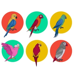 Exotic parrot tropical bird various parrots vector