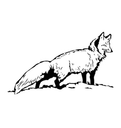Fox sketch hand drawn standing vector