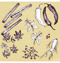 Set of hand drawn spices vector