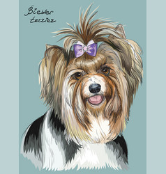 Colorful hand drawing portrait of biewer terrier vector