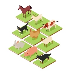 Domestic isometric animals vector