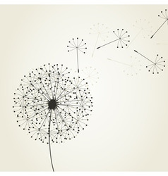 Dandelion seeds vector