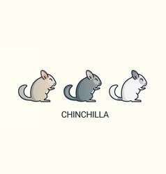 flat line chinchilla pets icons vector image vector image