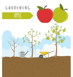 Gardening work farming infographic apple graphic vector