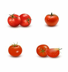 Set of tomato vector