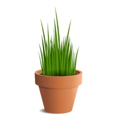 Green grass in a pot isolated on white background vector