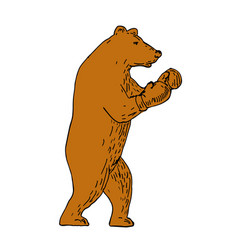 Brown bear boxing stance drawing vector