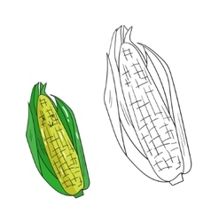 Educational game coloring book corn fruit vector image