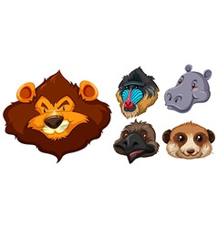 Animal heads on white background vector image vector image