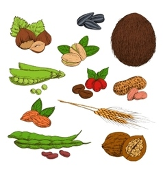 Sketched nuts beans seeds and cereals vector