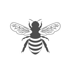 monochrome with bee vector image