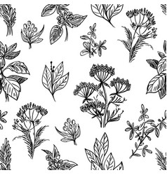 Sketch herbs and flowers seamless pattern vector