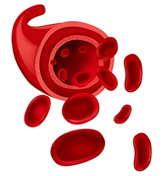 Red blood cells vector