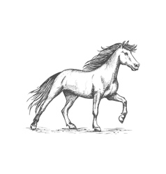 White horse stomping hoof sketch portrait vector image