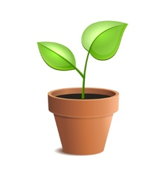 Young Green Plant in Pot Isolated on the White vector image