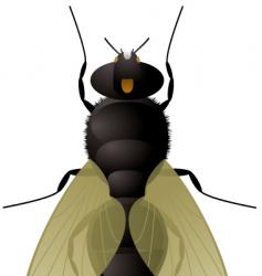 Fly illustration vector