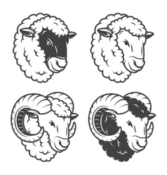 4 sheeps and rams heads vector