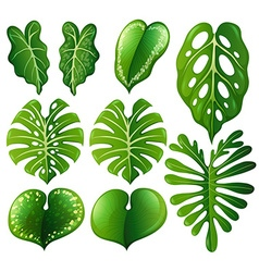 Set of different kinds of leaves vector image vector image
