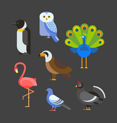 birds set isolated vector image vector image