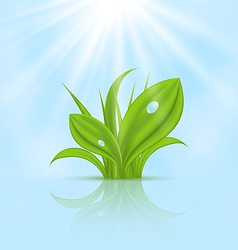 Spring wallpaper with green grass vector image