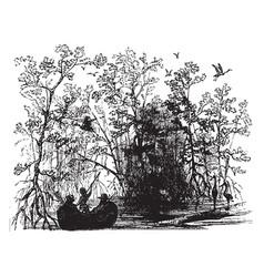 Mangrove swamp vintage vector