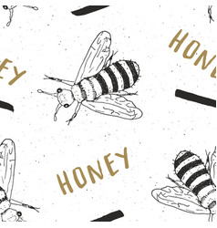 Bee hand drawn seamless pattern with word honey vector